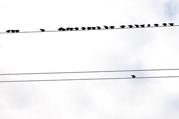 Birds on wires.