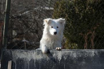 White cute watchdog