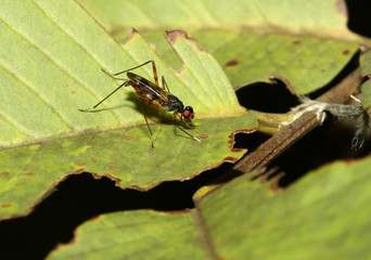 close up fly on leaf