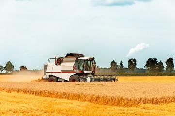 Harvest season. Combine cutting wheat on the field.