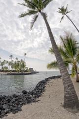 Coconut Palm Tree on tropical white sand beach