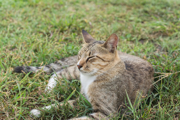 Tabby cat lying on the grass.