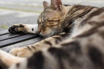Cat sleep on a chair.