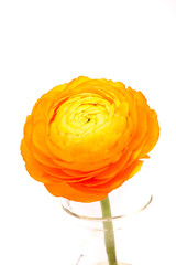 flower of sun
