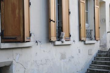 フランス・パリの猫