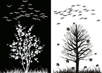 swans at spring and fall