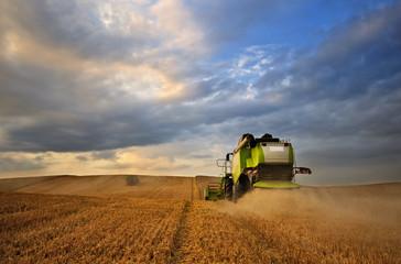Fototapeta Kombajn na polu pszenicy, obraz