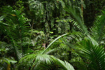 rainforest background