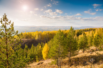 Pine trees in the forest in the mountains. Autumn landscape