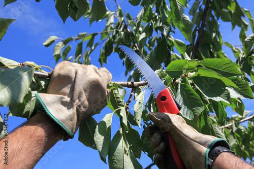 jardinería jardinero podar 4306-f14
