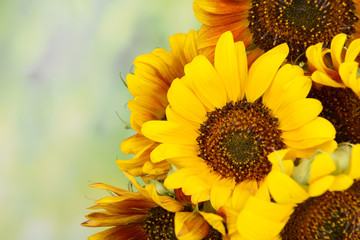 Beautiful sunflowers in pitcher on bright background