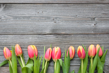 fresh tulips arranged on old wooden backgroun