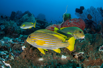 Colorful Reef Fish