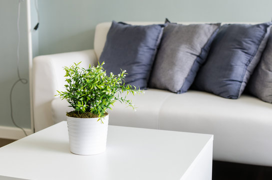 plants in white vase on white table with sofa