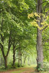 Linden parkway, early autumn scene