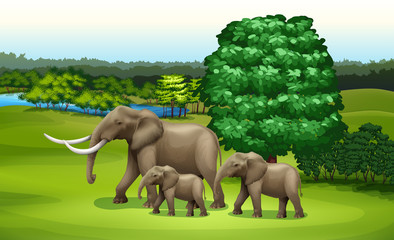 Elephants and the green plants