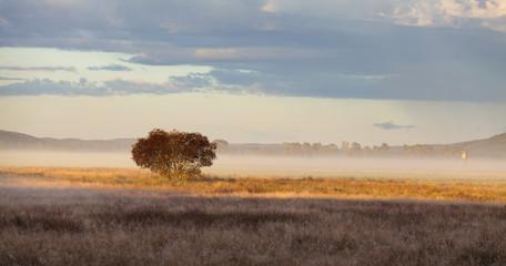 Wall Mural - Fog in the morning light