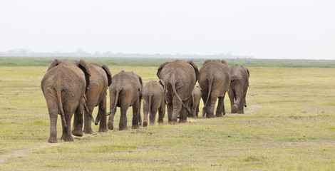 Elephant Herd in Kenya Wall mural