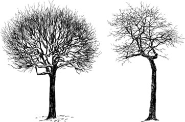 silhouettes of the trees