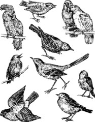 wild drawn birds