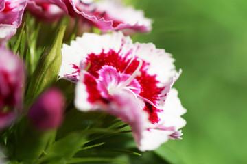 Garden cloves. Macro.