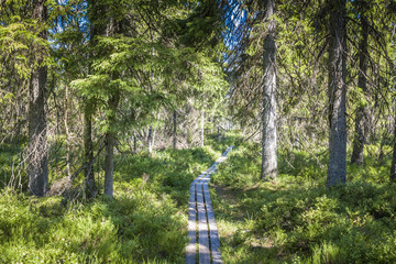 Best of Sweden - deep forest