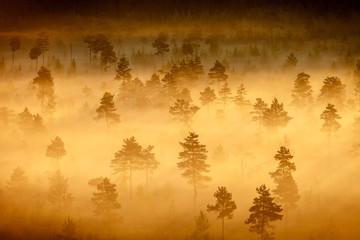 Foggy Swamp Landscape