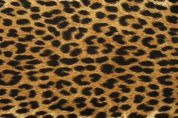 Close up leopard spot pattern