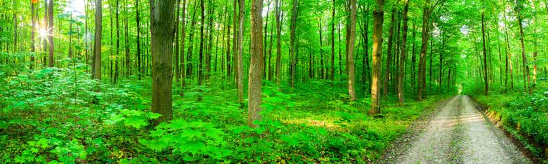 Keuken foto achterwand Weg in bos panorama forest