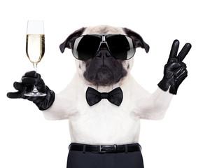 champagne glass dog