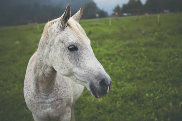 Close up shot of white horse on green meadow