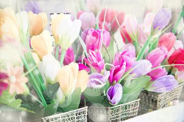 soft focus of Vintage tulip flowers.