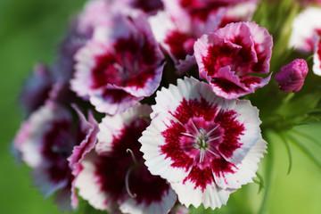 Garden cloves. Close up.