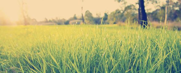 Lush Grass Instagram Style