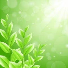 vector illustration sbackground green tea leaves