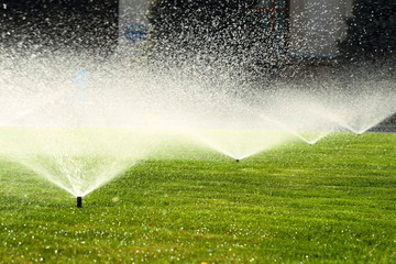 garden sprinkler on the green lawn