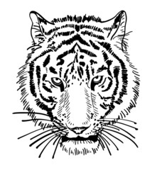 artwork of tiger face portrait, head silhouette
