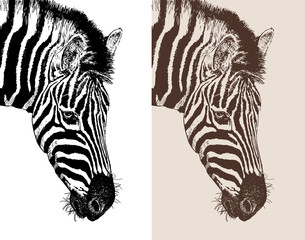 artwork head profile zebra