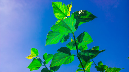 Leaves and Clear Sky