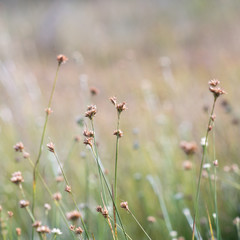 closeup of beautiful green grass with blur background