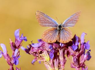 moth on wild flowers