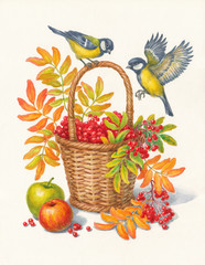 Синицы и ягоды рябины, осень, акварель.