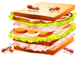 Sandwich and ants