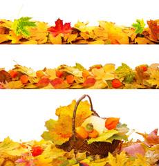 Herbst Deko Freisteller Ranken