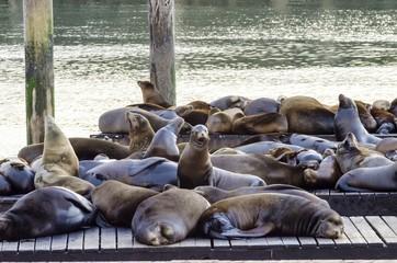 frisco seal