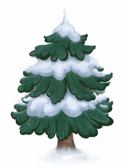 Winter snowy fir tree on white background. Christmas tree.