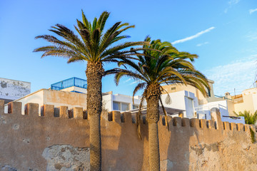 Two tall palm trees in front of a stone gate