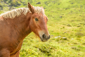 Young horse portrait with flies