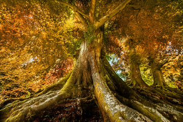 big old tree in autumn time