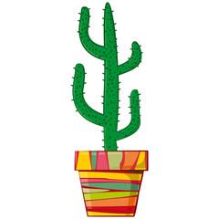Succulent plant in pot. Cactus in a flowerpot
